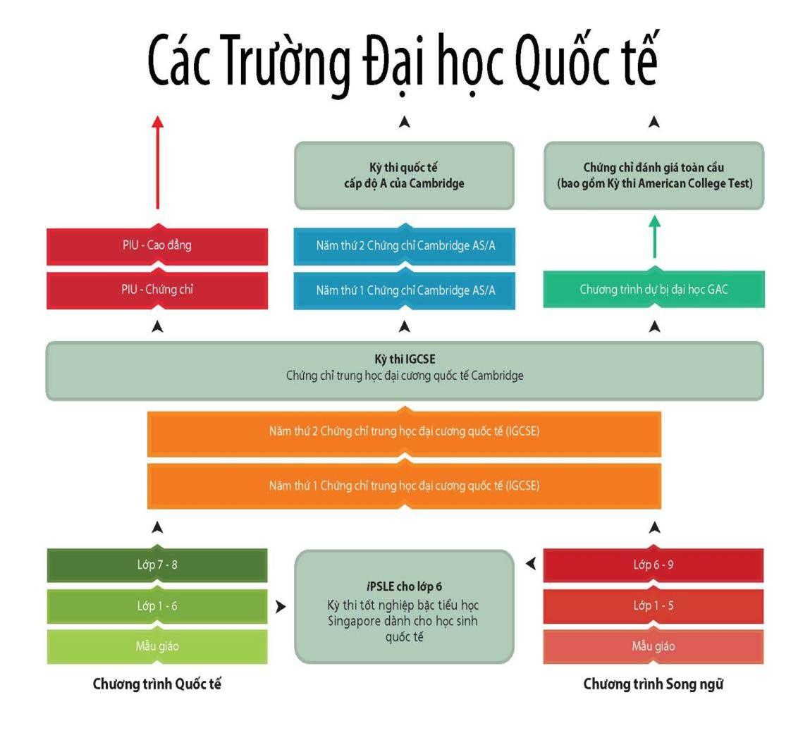 Study pathway Vietnamese